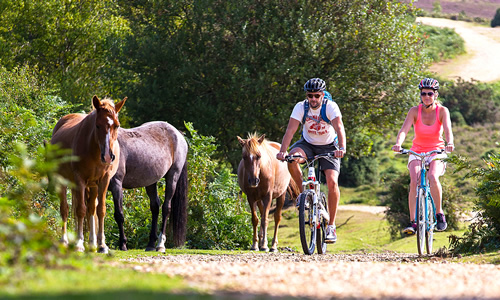 Couple on bicycles riding past horses