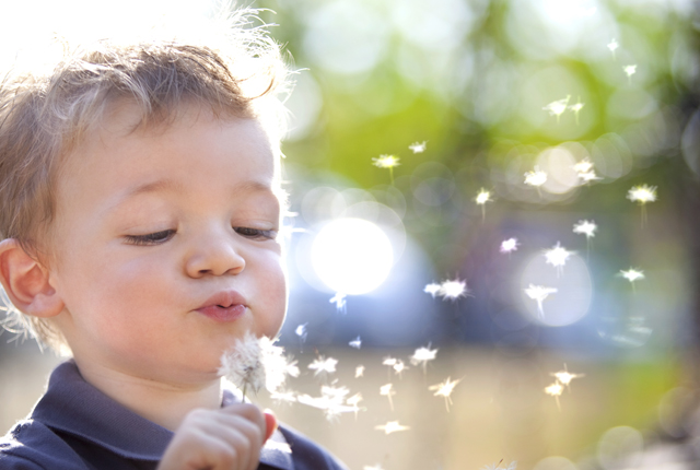 Child with a dandelion clock