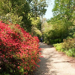 Image of path lined with bushes at Hillier Gardens