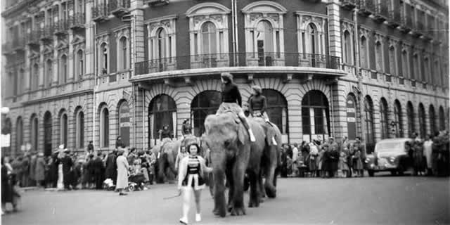 Chipperfields' elephants parading past the South Western Hotel in Southampton on 29 April 1956