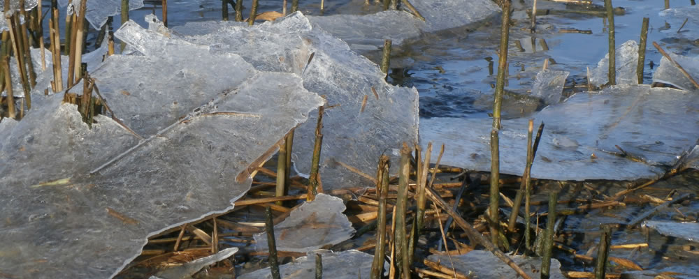 Mercury marshes under ice
