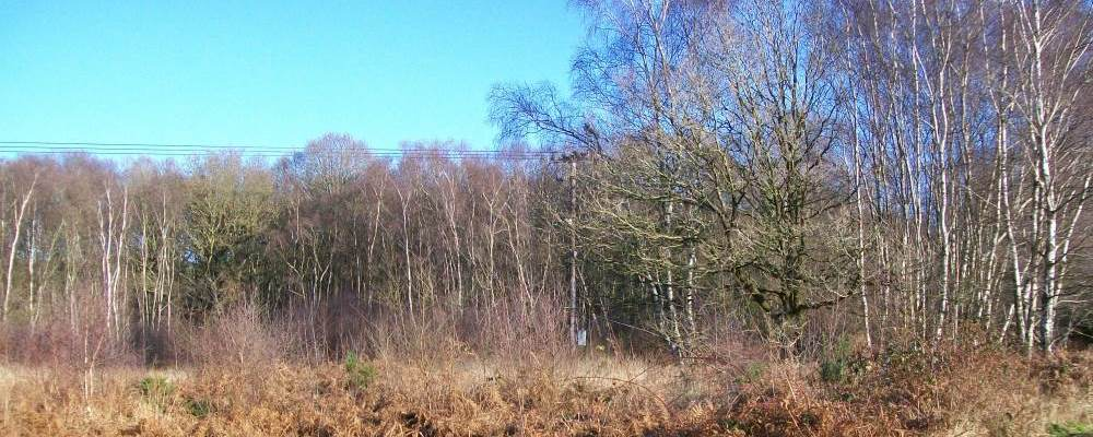 wickham common